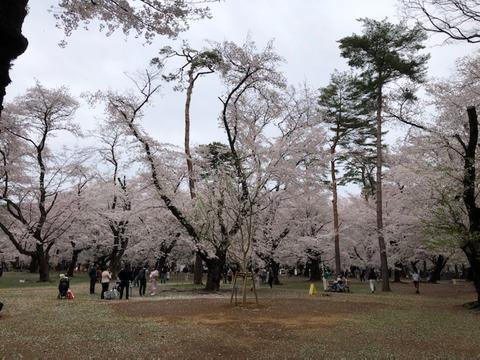 綺麗な桜210328