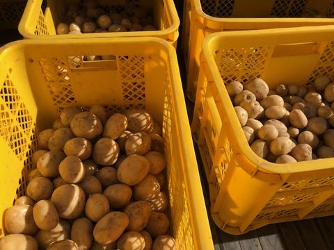 ジャガイモ201201