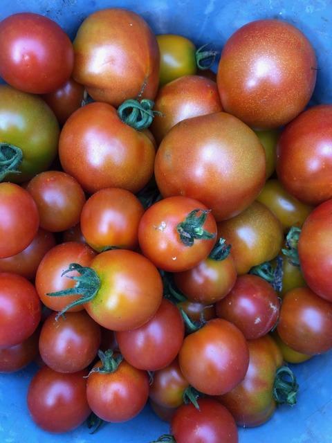 210723トマト