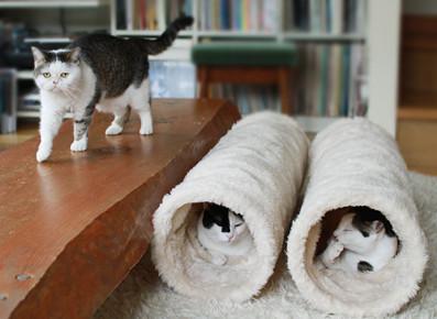 猫とPCケース 54台目 [無断転載禁止]©2ch.netYouTube動画>10本 ->画像>1058枚