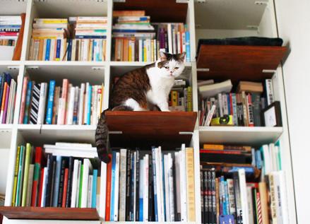 猫と暮らすリノベーション。猫好きが考えた「ネコ …
