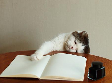 ノートを広げる変なポーズの猫