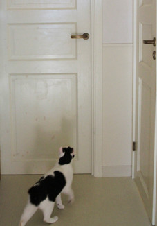 door1-9219