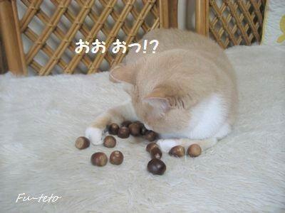 01bb1ebb[1]