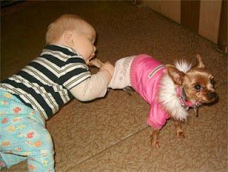 犬と赤ちゃん18