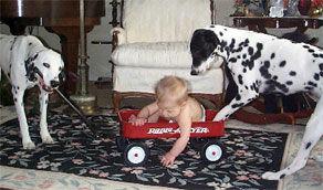 犬と赤ちゃん32
