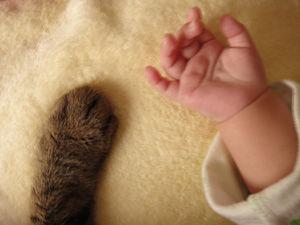 猫と赤ちゃん5