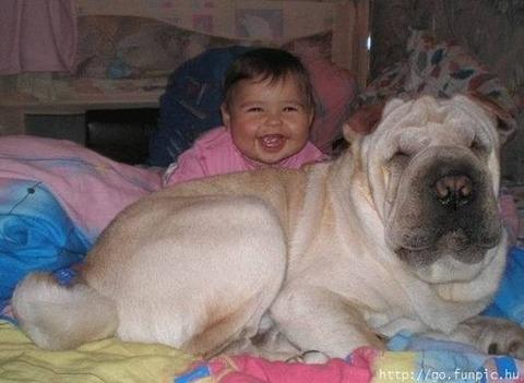 犬と赤ちゃん33
