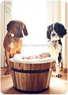 犬と赤ちゃん37