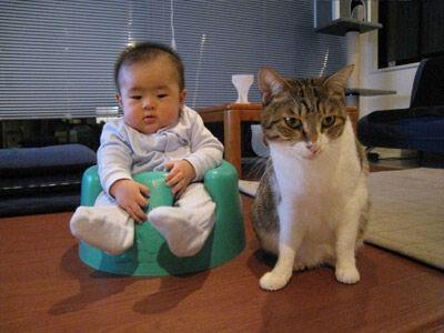 猫と赤ちゃん2