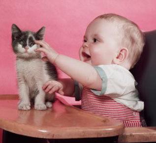 猫と赤ちゃん31