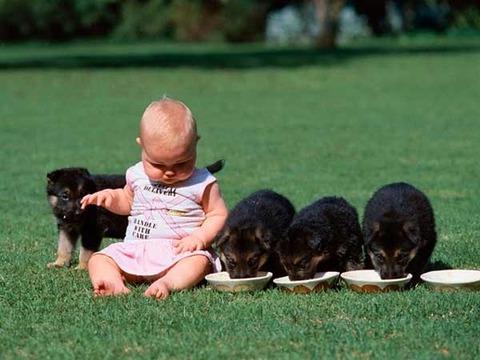 犬と赤ちゃん34