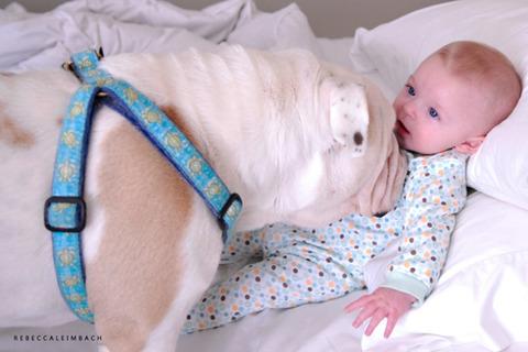 犬と赤ちゃん55