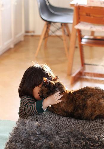 猫と赤ちゃん9