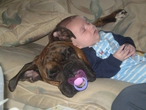 犬と赤ちゃん29
