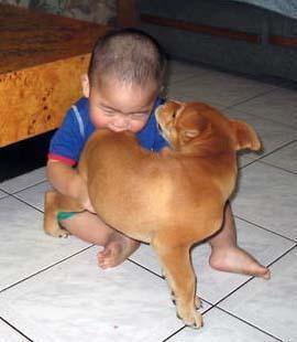 犬と赤ちゃん22