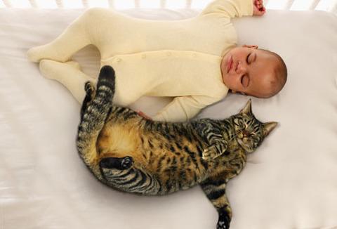 猫と赤ちゃん20