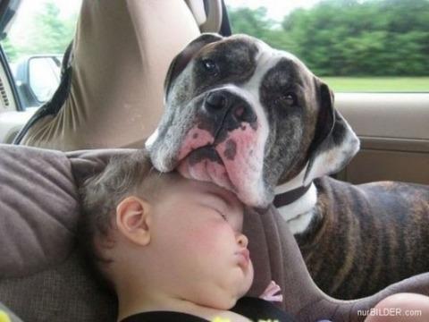 犬と赤ちゃん25