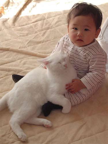 猫と赤ちゃん41