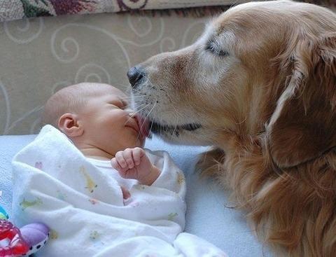 犬と赤ちゃん24