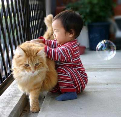 猫と赤ちゃん40