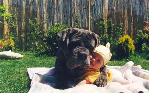 犬と赤ちゃん51