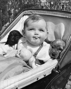 犬と赤ちゃん41