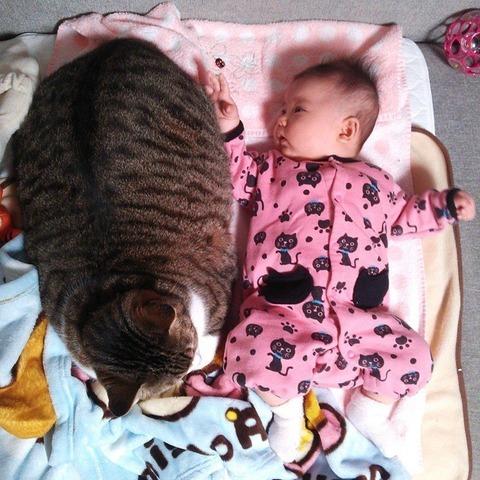 猫と赤ちゃん30