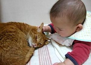 猫と赤ちゃん35