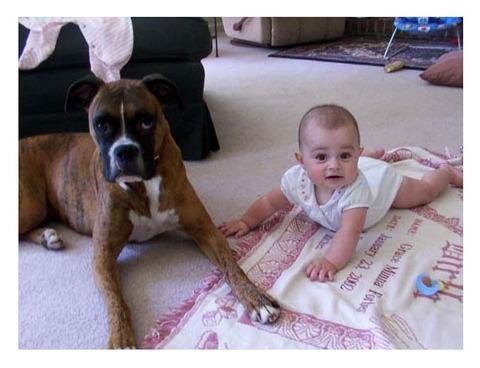犬と赤ちゃん2