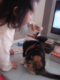 猫と赤ちゃん38