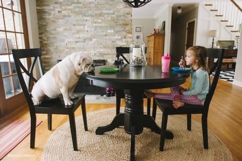 犬と赤ちゃん9