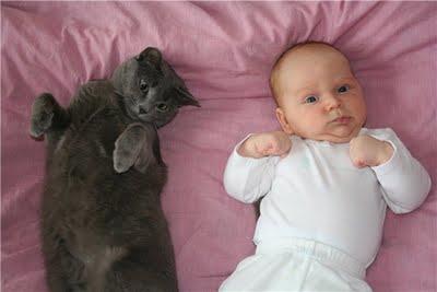 猫と赤ちゃん22
