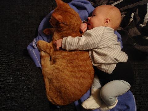 猫と赤ちゃん13