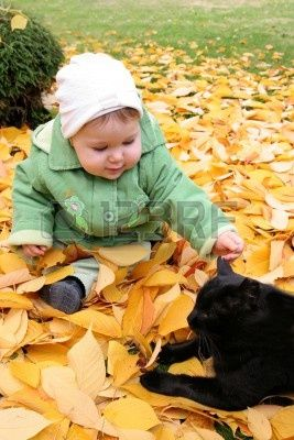 猫と赤ちゃん36