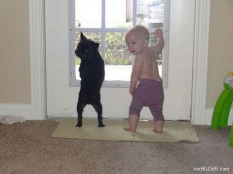 犬と赤ちゃん23
