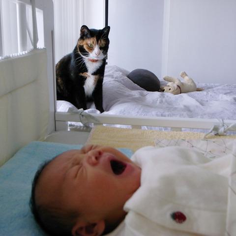 猫と赤ちゃん33