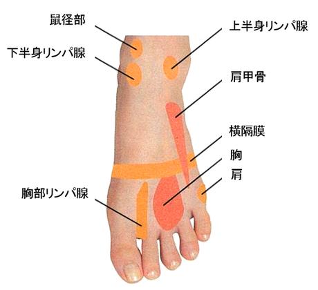 足甲のつぼ