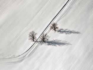trees-road-latvia