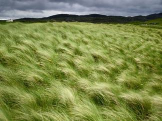 beach-grass-scotland
