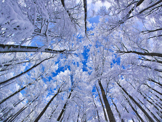 beech-forest-germany-snow