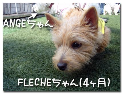 ANGEちゃんとFLECHEちゃん
