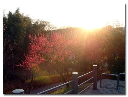 日没と紅梅