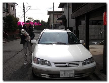 11年の愛車