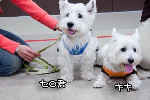 セロ&キキ