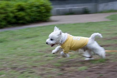 走るキキ�