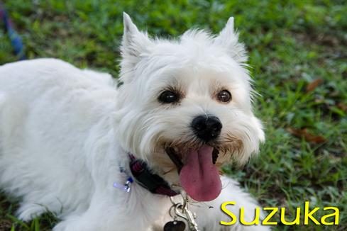 Suzuka