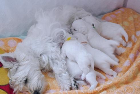 pupies3