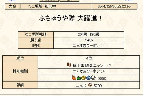 猫場所初日終了・・・(´・ω・`)
