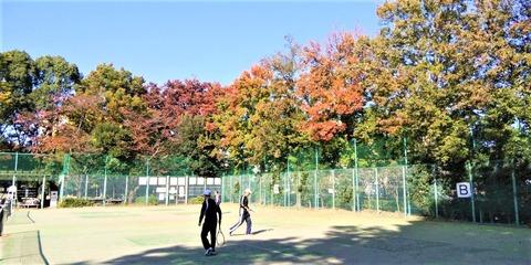 テニスコートの紅葉